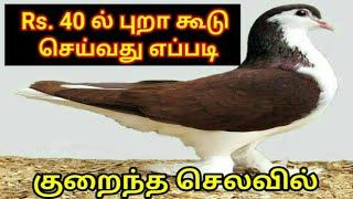 #Pets360 Rs.40ல் புறா கூடு | செய்வது எப்படி | Pigeon Breeding Cage | Only 40 Rupees