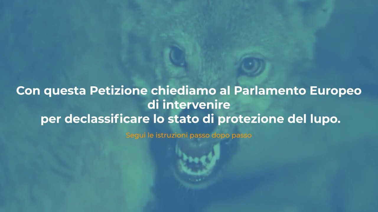 Petizione al Parlamento Europeo per declassificare il lupo - Firma subito!