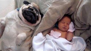 Γάτες Και Τα Σκυλιά Αντιδρούν Με Τα Μωρά - Χαριτωμένο Ζώο