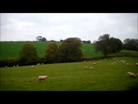 An Hour of Sheep