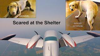 Puppy Rescue Flight Part 1: Escape the Kill Shelter