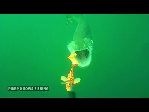 Savage Gear 3D Burbot in Action - Pike Fishing Waterwolf Underwater Footage
