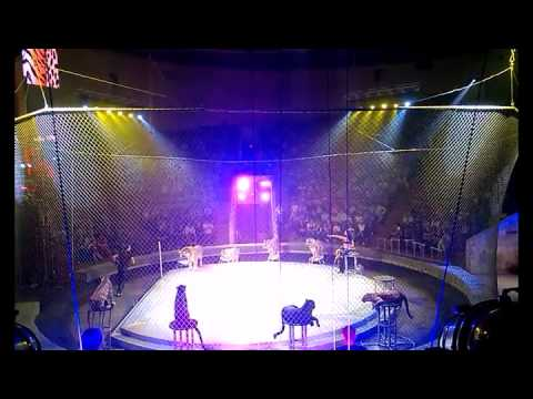 цирк шоу баронеты