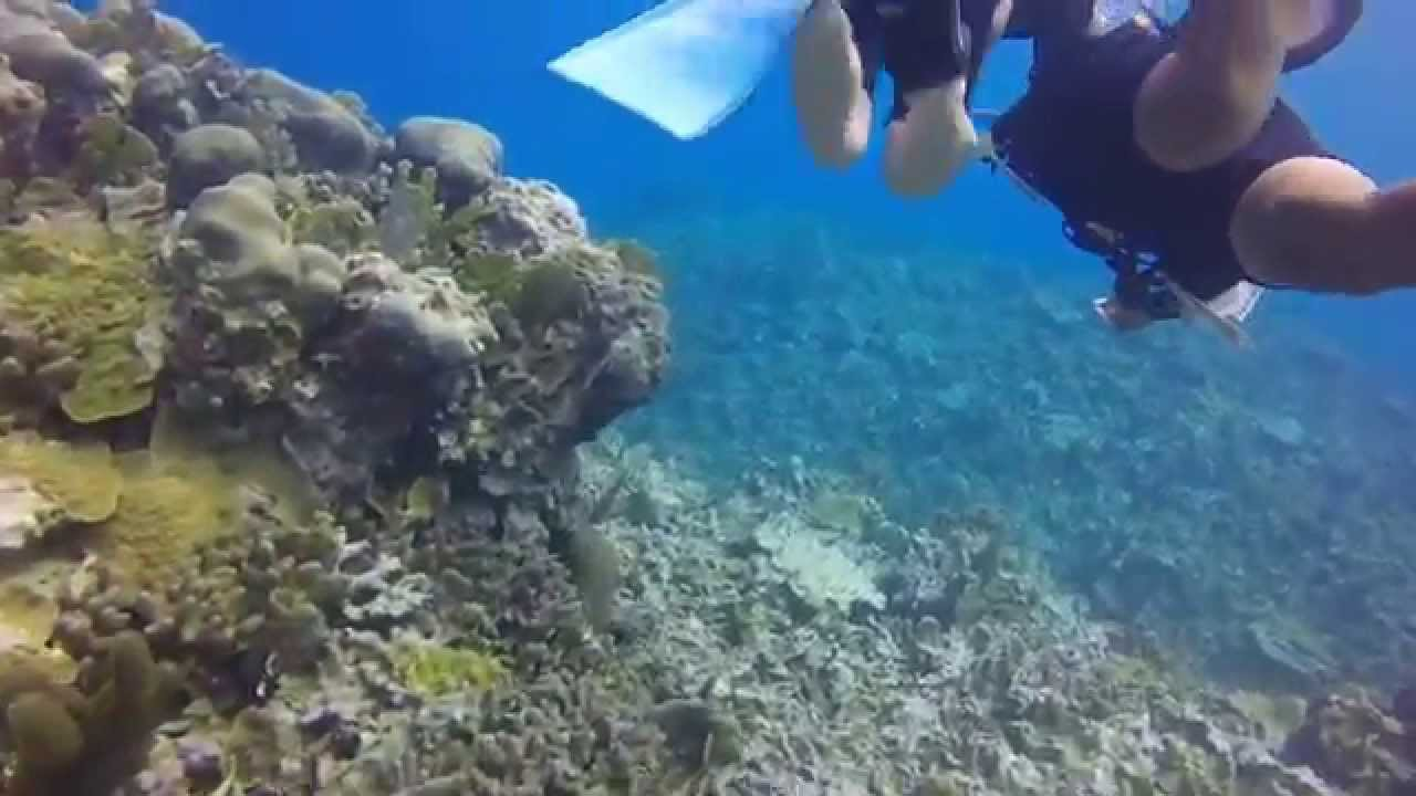 Scuba Diving At Beaches Resort In Ocho Rios, Jamaica