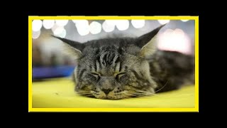 К чему снится кошка| TVRu
