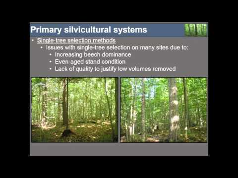 Exploring Silvicultural Strategies in VT's Changing Forest – Northern Hardwoods