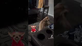 Holly's dog circus