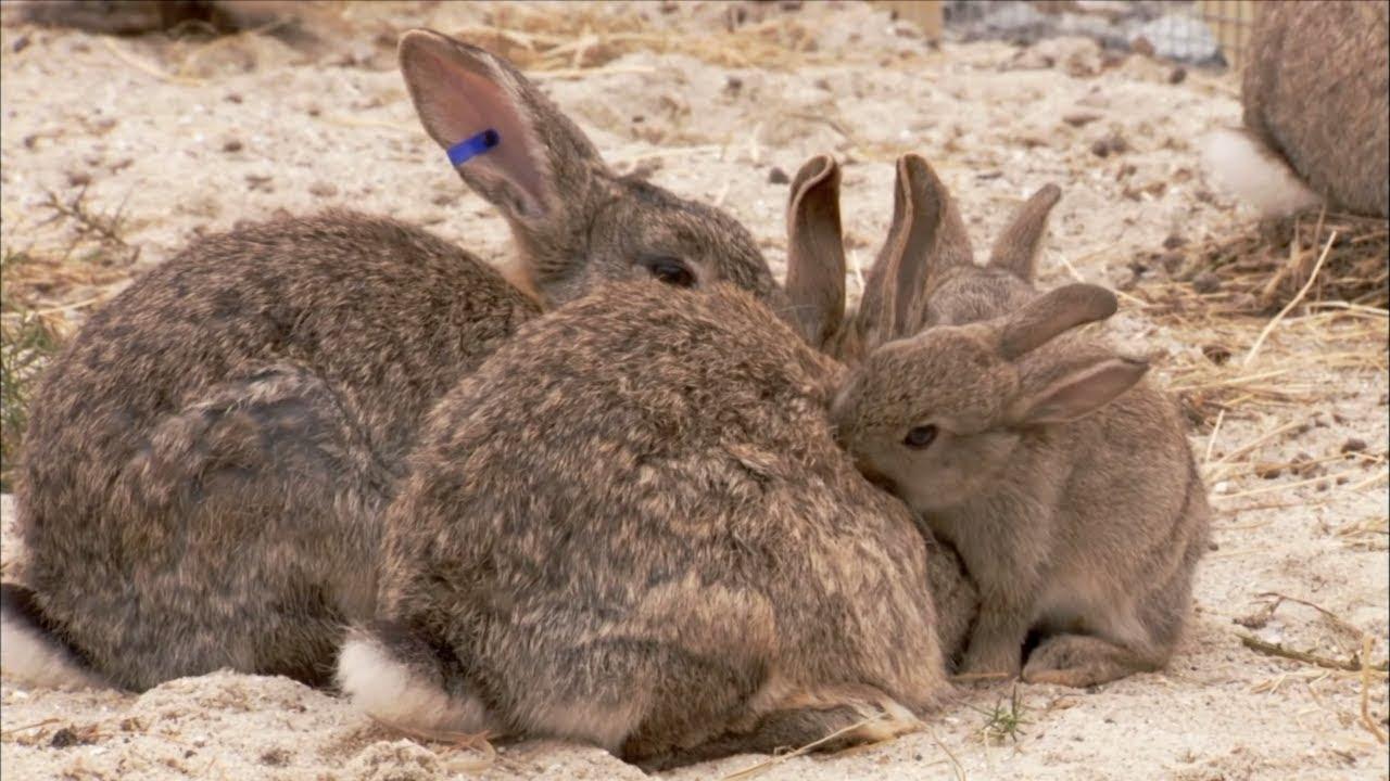 The Burrowers: Animals Underground - Baby Rabbits | Wildlife Documentary | Natural History