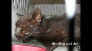 Suffering of cats at 10th Life sanctuary (Florida)