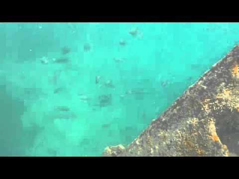 Snorkeling at Bongoyo Ship Wreck | Tanzania Africa