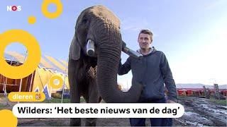 Tweede Kamer stemt over olifant: Buba mag blijven