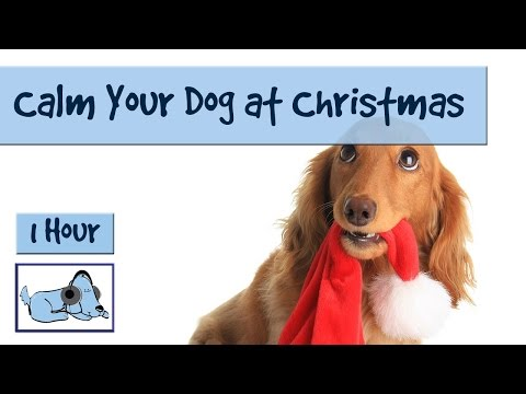 1-hour-of-dog-music-for-christmas-chaos!!-calm-your-dog-at-christmas