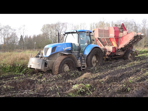 Sugar beet harwesting in mud with New Holland T7.270, TL100, wet, difficult conditions