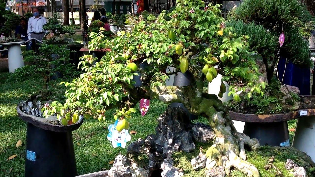 20 mẫu cây cảnh bonsai nghệ thuật tuyệt đẹp