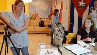 Как нарисовать сову? Рисуем квадратик и пририсовываем к нему оставшуюся Ёлку!