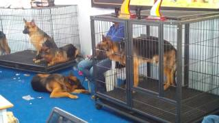 Dog show in Hyderabad