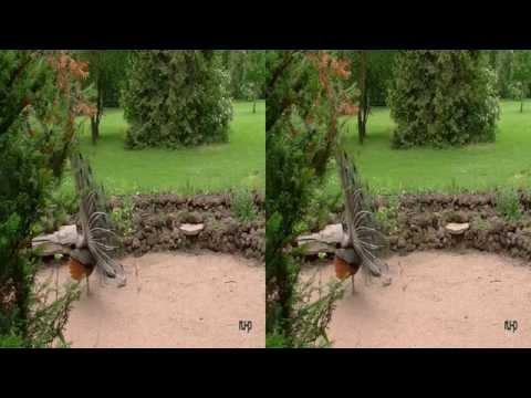 Wörlitzer Park - tierische Idylle - Real 3D