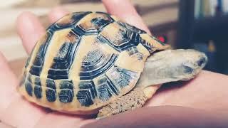 귀여운 거북이 대신 만져드립니다. @해돌이(동헤르만 육…