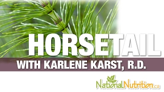 Professional Supplement Review - Horsetail