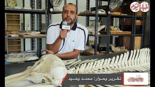 أخبار اليوم | هشام سلام يكشف سر موت الدولفين على الشواطئ