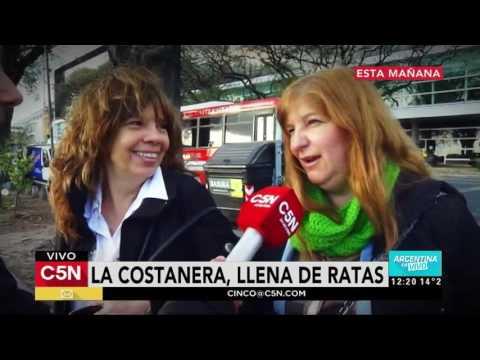 C5N - Sociedad: Ratas en Costanera