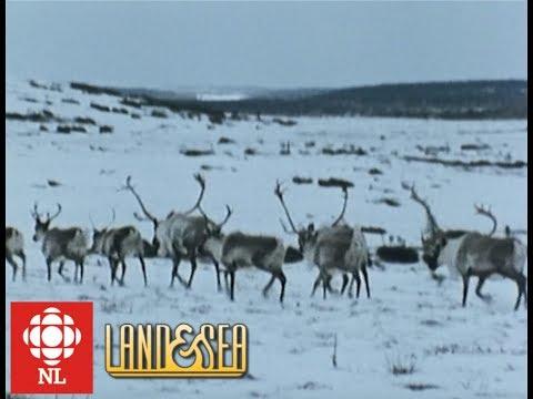 Land & Sea: Mushuau Innu learn to hunt caribou in Labrador