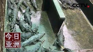 [今日亚洲]速览 悲剧!照看不周 柬2岁女童跌落鳄鱼池惨死  CCTV中文国际