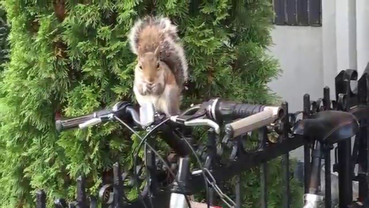 Cute Squirrel On A Bike Bicycle Eating His Nut Youtube