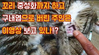 고양이 중성화하고 구내염 때문에 버린 주인은 이영상 보고 있나!?