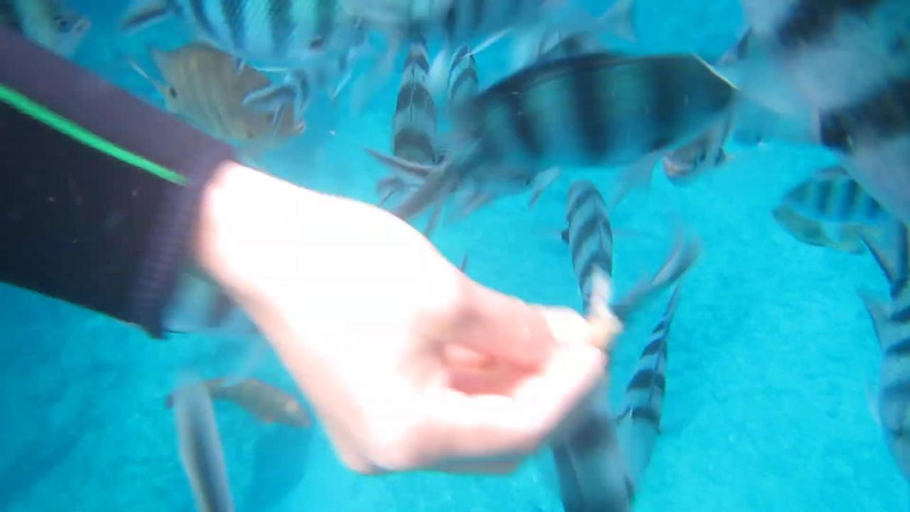 沖縄の青の洞窟でシュノーケリング