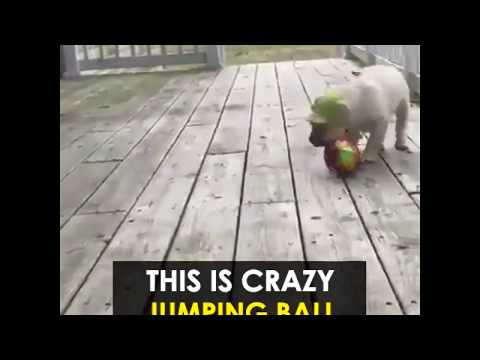 led-jumping-activation-ball-best-dog-toys