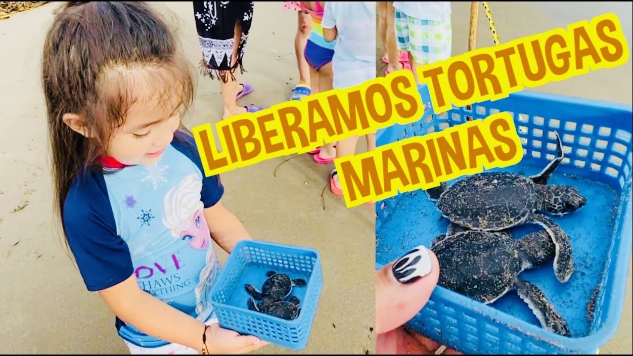 LIBERAMOS TORTUGAS MARINAS / TECOLUTLA / LOS DESTRAMPADOS
