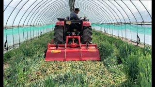 [토양병원 리포트 21탄] 23년 수박 농가의 녹비재배…