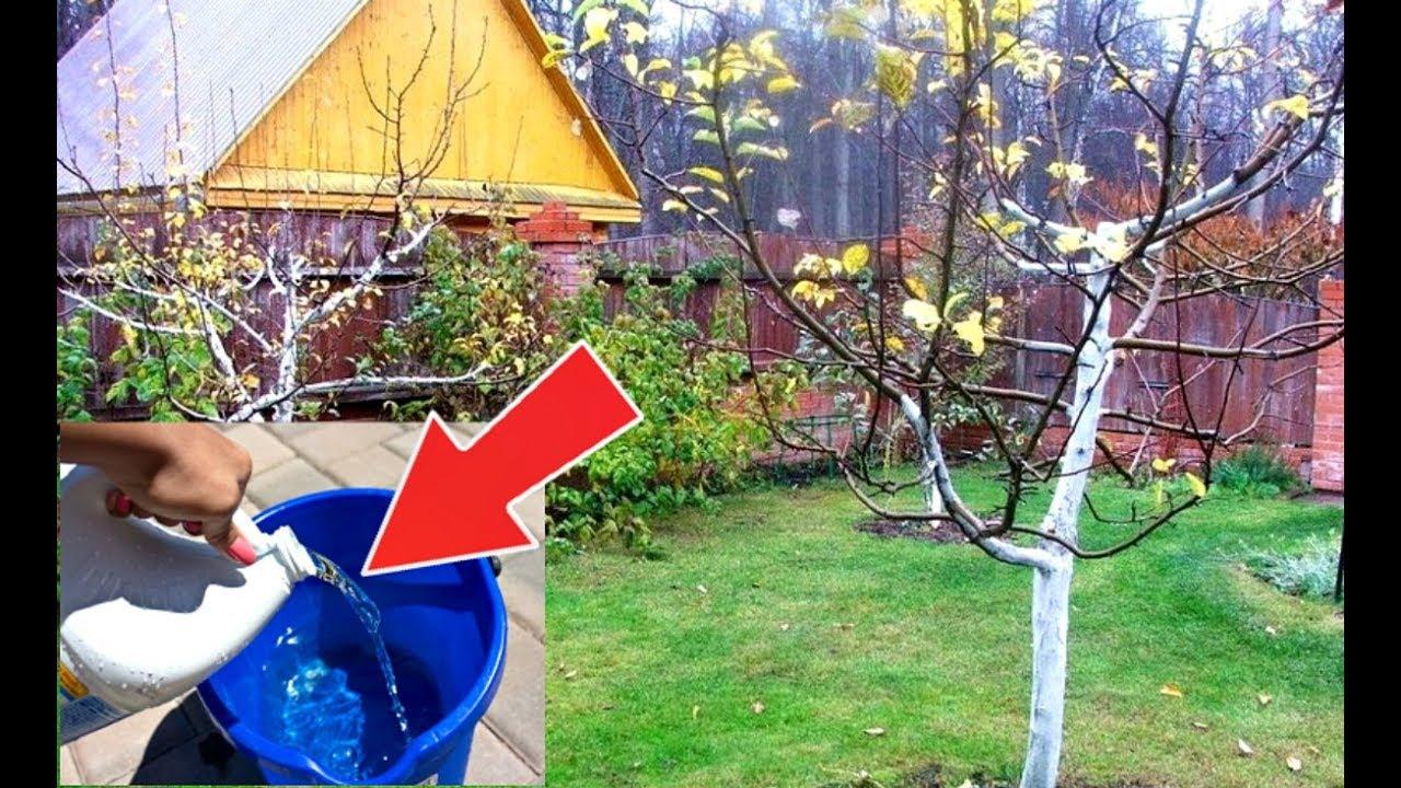 Средство от всех вредителей и болезней плодовых деревьев осенью!
