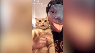Videos De Risa 2020 nuevos  Animales Graciosos  Momentos Divertidos De Gatos y Perros Chistosos #3