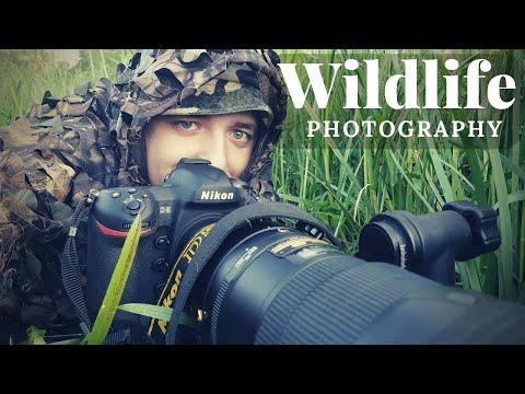 WILDLIFE PHOTOGRAPHY - The Eurasian Beaver | LOODUSFOTOGRAAFIA - Emajõe Kobras