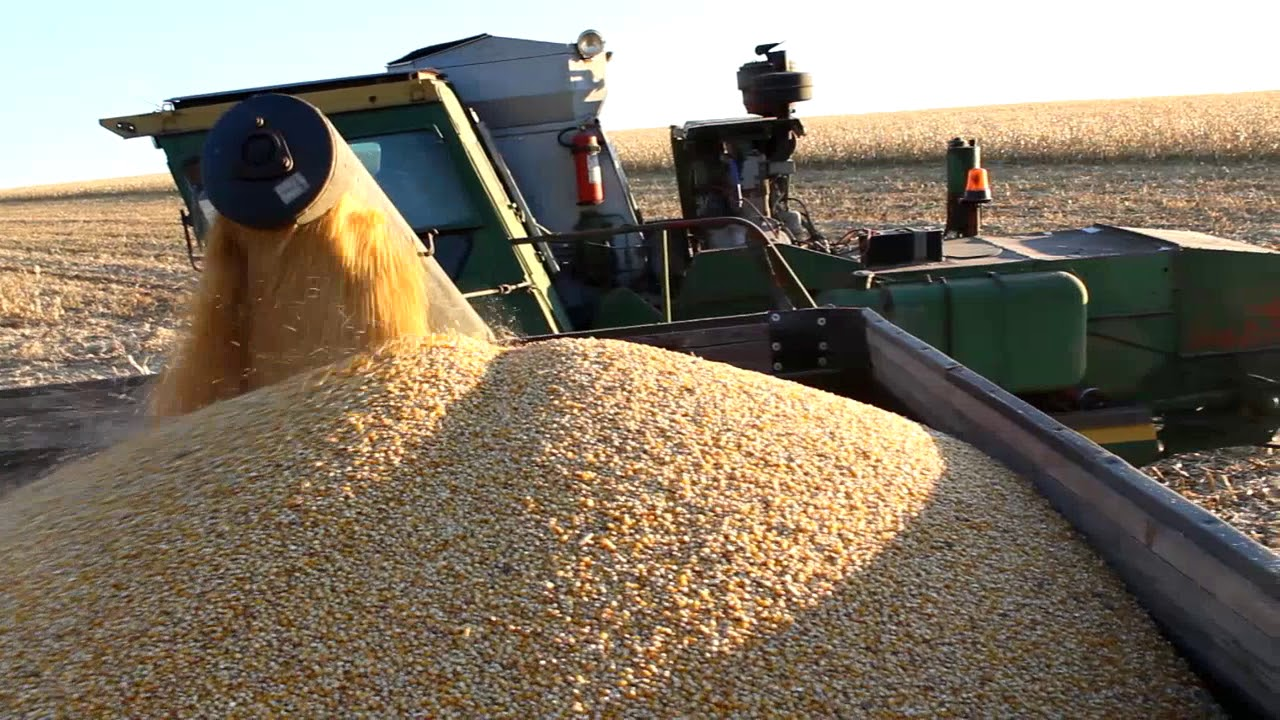 Уборка кукурузы 2018г.
