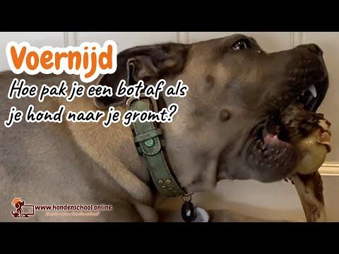 Voernijd – hoe pak je een bot af van je hond