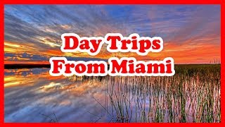 5 Best Day Trips From Miami, Florida | US Travel Guide