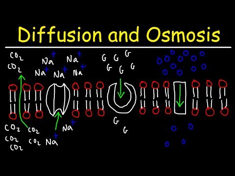 Diffusion and Osmosis - Passive and Active Transport With Facilitated Diffusion