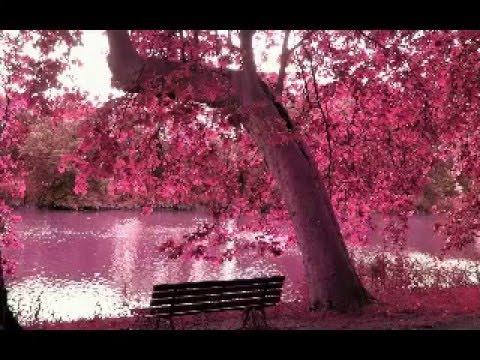 Iphone X Cherry Blossom Wallpaper Beautiful Nature Spring Season Youtube