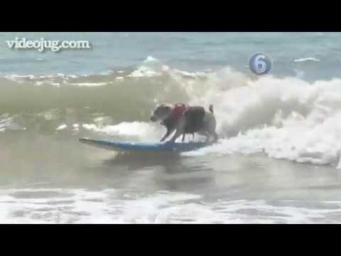 How To Teach Your Dog To Surf