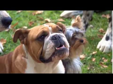 BBC Rogue Traders - Puppy Selling Series 36: Episode 1
