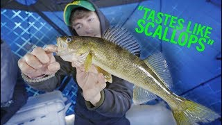 The BEST Fish to Eat -- Toothy Ice Fish Catch n Cook