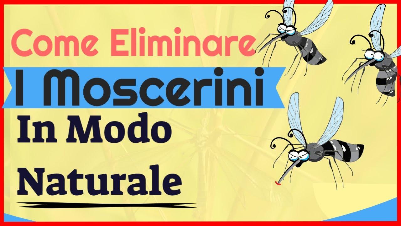 Come Eliminare I Moscerini In Modo Naturale: Liberati Dei Moscerini In Pochi Minuti [2020]