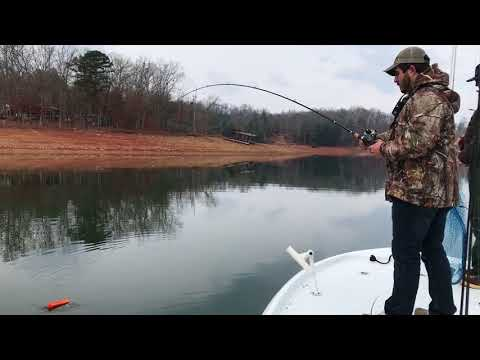 Lake Nottely striper Fishing with Big Ol' Fish Guiding Service