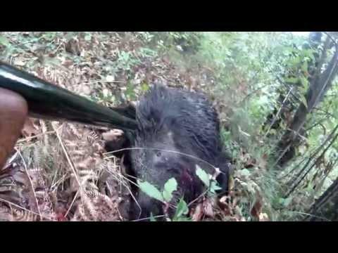 Caccia al Cinghiale Hunting Wild Boar Caliber 30.06