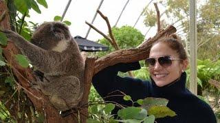 Why is this Koala Australia's celebrity magnet?
