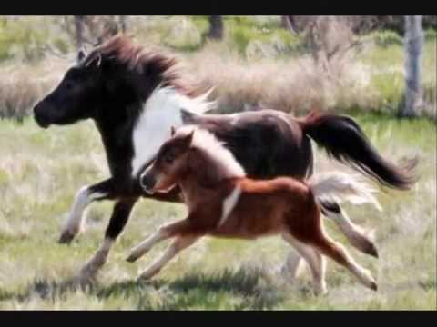 Happy Horse Moms Amp Foals Mothers Day Special Youtube