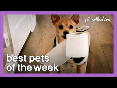 Special Delivery | Best Pets of the Week